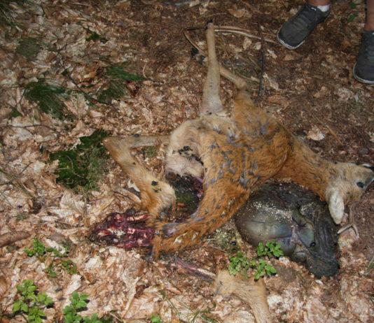 Weihnachtsgrüße Jagdlich.Allgemein Für Jagd In Deutschland E V Seite 3